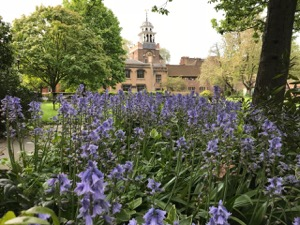 Bluebells on the green at Charterhouse Square